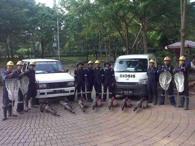 biosis-tim-pengasapan-indonesia.jpg