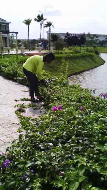 pemeliharaan taman oleh biosis (2)