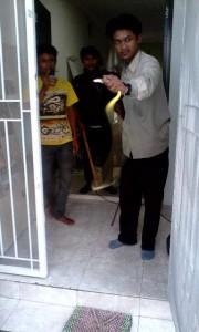 Pengendalian Hama Ular oleh Biosis di perumahan warga