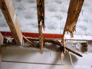 termite-control-basmi-rayap-biosis1.jpg